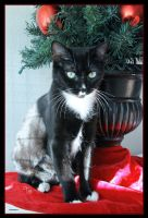 Inky's Shelter Christmas Tree by TeaPhotography
