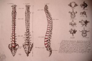 Spine, backbone by reinisgailitis