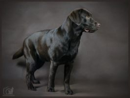 Labrador retriever by ankaszklanka