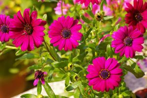 Flowers of the Polar Star III by expression-stock