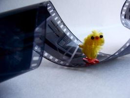chick adventures_ photog by dragorien