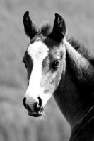 foal in BW by imtl