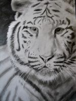 white tiger by monster242