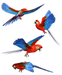Scarlet Macaw PNG Stock by Roy3D