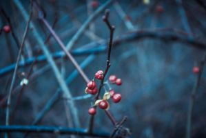 Winterberry Red by Rainfleuris