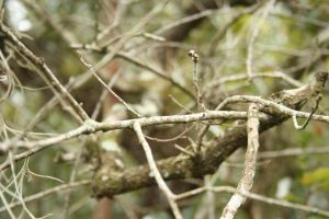 Branches, upclose by elf-fu-stock