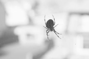 Black and white macro spider by maarten1982