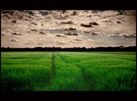 The Spring Field by mutrus
