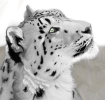 Snow Leopard by Shadow-Flyer