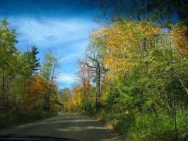Blue skies in fall by shush-stock
