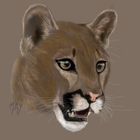Cougar Profile by TheSpaceJumper
