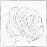 The Rose of my Soul by TheYamiiSa