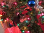 Velcro Under the Christmas tree by JediSenshi