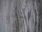 Wood texture 004 by AnnFrost-stock