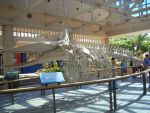 Whale Skeleton In Maui by donna-j