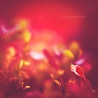 Rouge passion I by ChristineAmat
