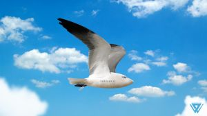 Birdplane Airline by wellgraphic
