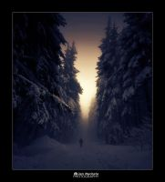 Lost in the fog by TheJokerCZ
