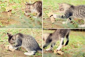 Danbo and A Kitten by ilhaman