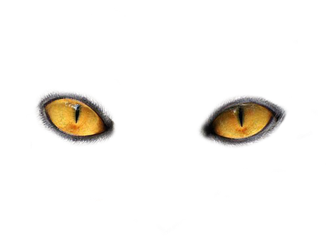 Cats Eyes by Moonglowlilly