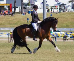 STOCK - Gold Coast show 341 by fillyrox