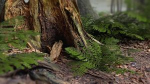 The Forest - Concept Artwork by Dee van Hoven by Dee-Deviantart