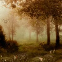 Enchanted Forest by DilekGenc