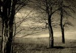 three trees by the-r-gonaut
