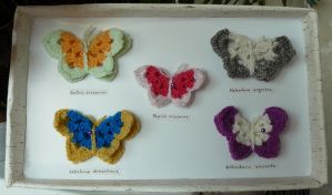 Butterfly collection by ilwin