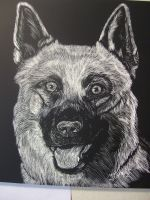 German Shep: Relay for Life Fundraising by whitekratoswolf
