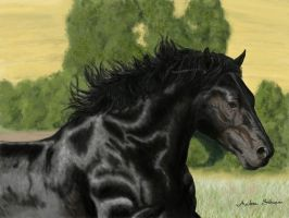 Percheron horse photoshop by AndreaSchepisi