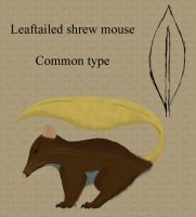 Leaftailed shrew mouse by chili19