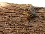 small lizard by scorpion2200seba