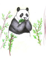 Panda by BigGirlsArt