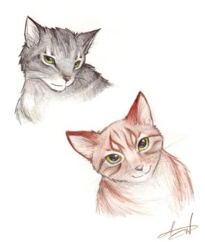Cats by ArissaDoll