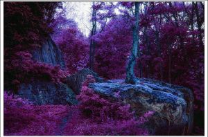 Magical Forests III by Riot23