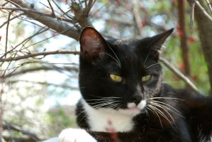 Sylvester Outside by Mistersmith