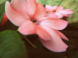 Pink Flower 2 by Nikee97