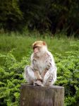 Monkey by michaf