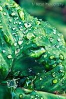 Dew Drops by musicity