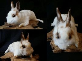 White and brown rabbit softmount by DeerfishTaxidermy