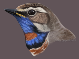 Bluethroat Study by winternacht