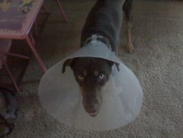 I DoNot Like The Cone Of Shame by UxieSweetie