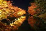 Japanese Autumn 2015 - 18 by caffinefreek