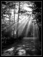 Sunlight Black and White by jen22-03