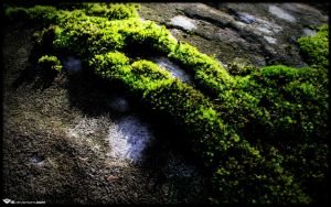 Morning Moss by l8