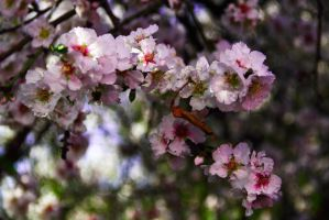 Spring almost here by ShlomitMessica