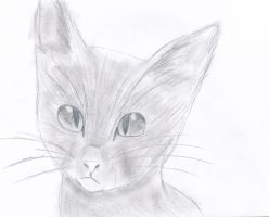 semi-realistic cat (practice) by thelongdreamer
