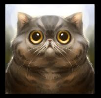 Exotic Shorthair by MelissaBrouwer