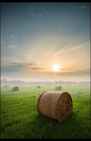 Harvest by RS-foto
